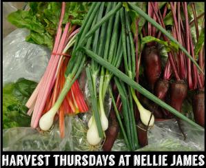 Harvest Thursdays at Nellie James